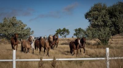 Kara Creek Ranch