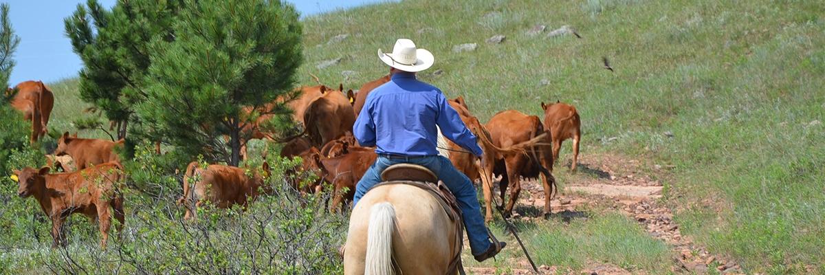 Cowboy Cowgirls incontri Bading Ang Dating download gratuito
